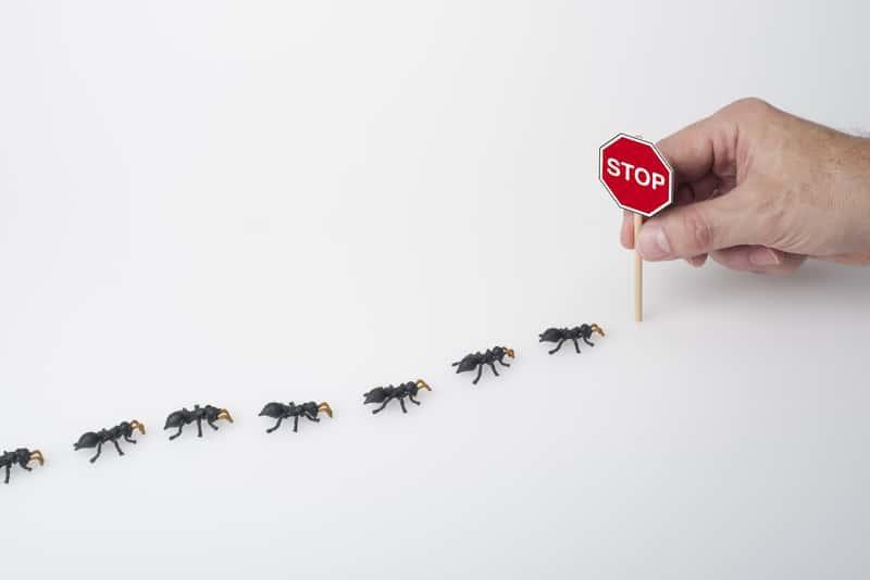 Mrówki idące po białym stole i znak stop ograniczający ich przemieszczanie się, a także domowej roboty pułapki na mrówki
