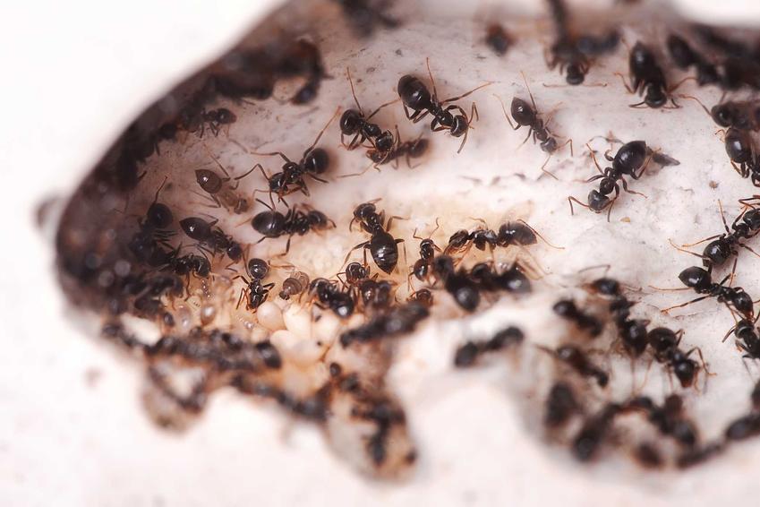 Preparat na mrówki, który pozwala na skuteczne pozbycie się mrówek z domu i jego otoczenia, a także najlepsze środki i skuteczność