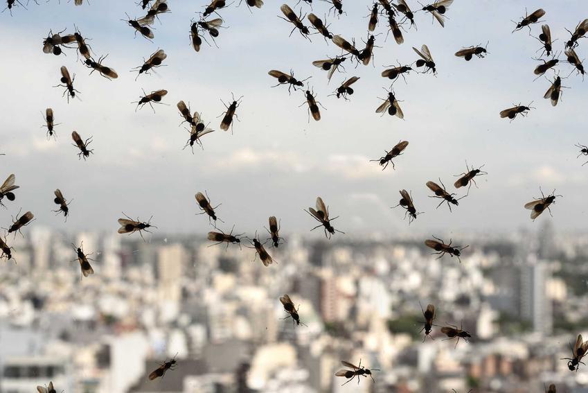 Latające mrówki w domu, czyli mrówki ze skrzydłami w domu na szybie okna oraz porady jak usunąć latające mrówki