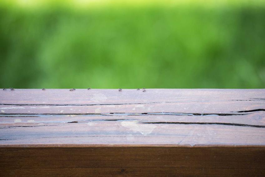 Mrówki na drewnie w domu oraz sposoby, jak wytępić mrówki w domu i mieszkaniu krok po kroku, najlepsze domowe i chemiczne sposoby