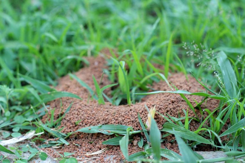 Inwazja mrówek, czyli mrowiska w ogrodzie oraz naturalne i chemiczne sposoby na mrówki w ogrodzie krok po kroku