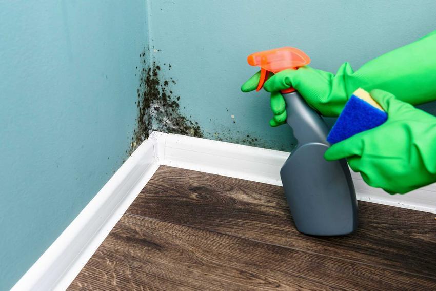 Środek grzybobójczy czy też środek antygrzybiczny i polecane środki odgrzybiające do ścian i innych elementów budynku