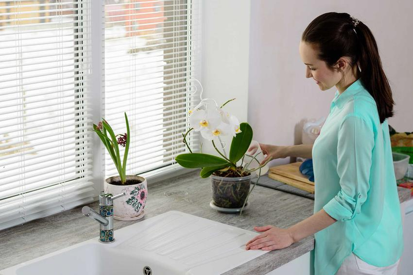 Kobieta podlewająca storczyki oraz porady jak podlewać storczyki i czym podlewać storczyki oraz jak je nawadniać krok po kroku