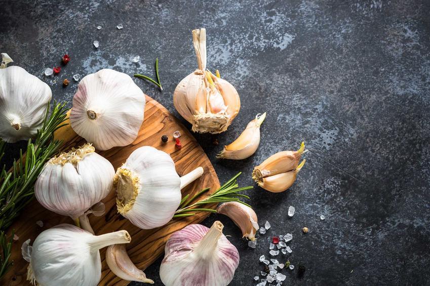 Główki czosnku oraz porady, jak przechowywać czosnek, w tym suszenie czosnku czy konserwacja czosnku