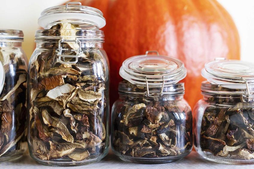 Suszone grzyby  w słoiku oraz porady, jak przechowywać suszone grzyby i w czym przechowywać suszone grzyby