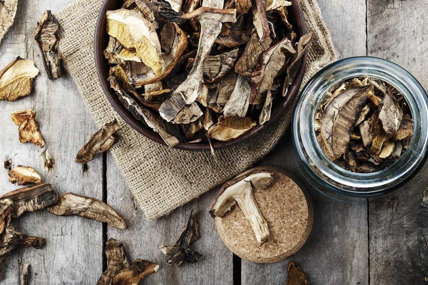 Suszone grzyby oraz porady, jak przechowywać suszone grzyby i w czym przechowywać suszone grzyby uzbierane samodzielnie
