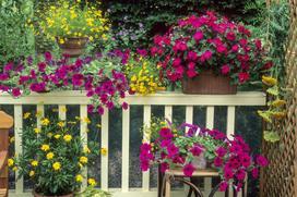 Jakie kwiaty na balkon wybrać? Praktyczny poradnik dla każdego
