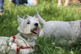 Zakładanie szelek dla psa krok po kroku - zobacz, jak to zrobić prawidłowo