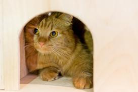 Jaka buda dla kota? Rodzaje, ceny, opinie, ocieplenie, porady