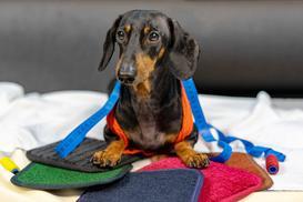 Jak uszyć legowisko dla psa? Praktyczny poradnik DIY