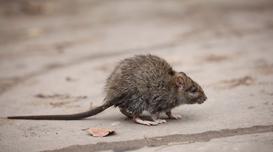 Jaka trutka na myszy? Rodzaje, ceny, opinie, porady przy wyborze