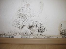 Grzyb na ścianie a wpływ na zdrowie – jakie są konsekwencje pleśni w domu?