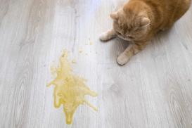 Jak się pozbyć zapachu kociego moczu? Najlepsze sposoby na neutralizację przykrych zapachów