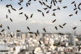 Latające mrówki w domu – skąd się biorą mrówki ze skrzydłami i jak z nimi walczyć